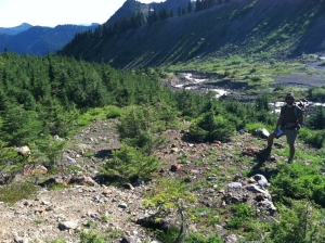 Small trees have begun to grow several hundred meters below the glacier terminus.