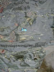 Folded sea floor basalt exposed in the river.