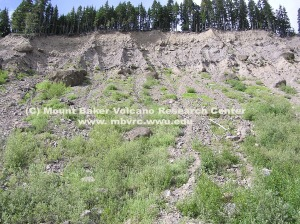 The Little Ice Age moraine 1 km down valley from the glacier terminus consists of unconsolidated material. Dave Tucker photo.