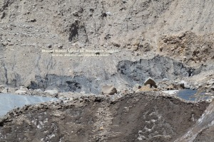 Telephoto of the face of the 20th C moraine that collapsed on May 31. A small event had large effects downvalley.